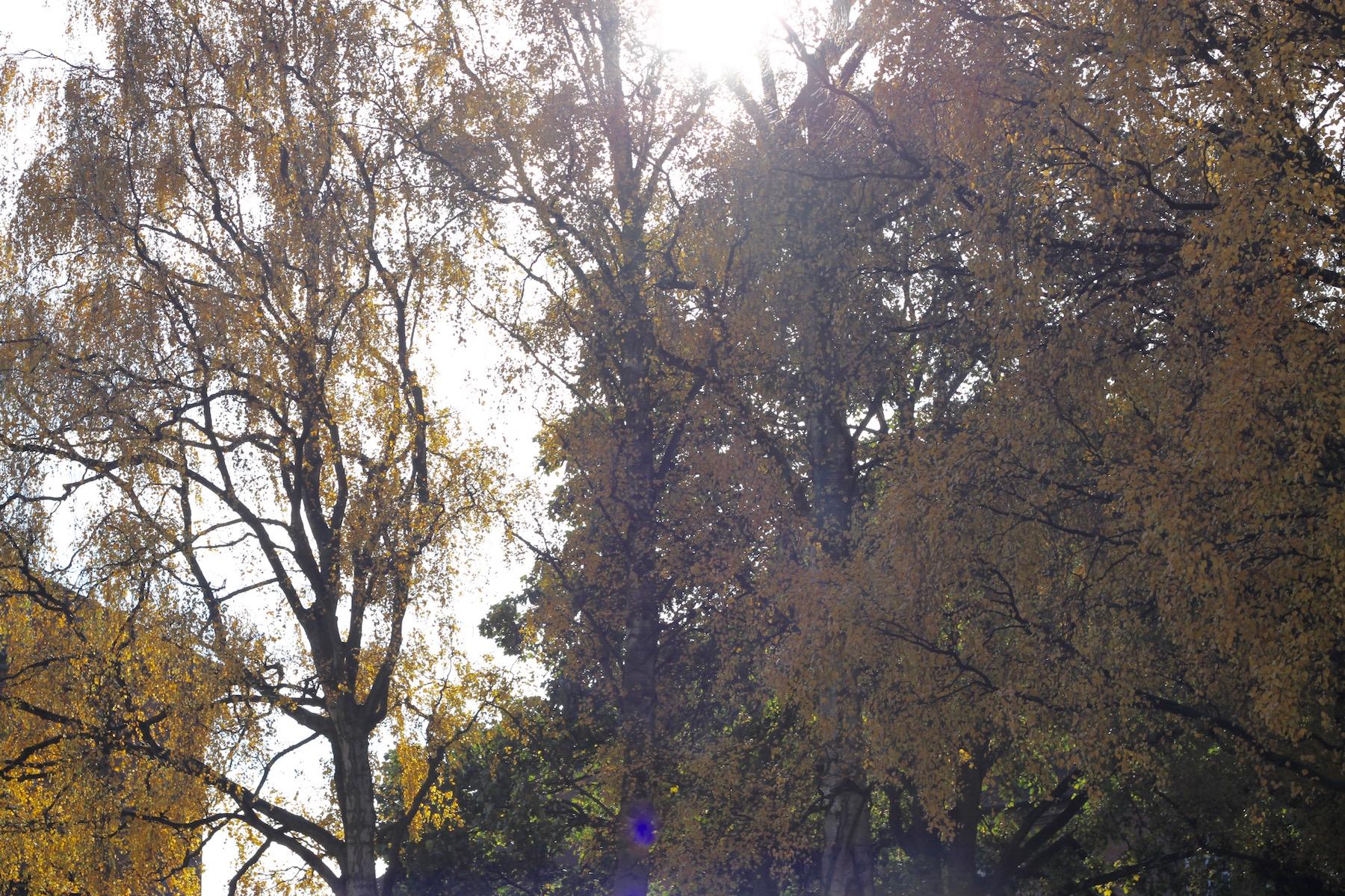 fall leafs winter copenhagen